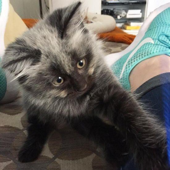 Rescue Kitten S Fever Coat Changes Color Kitten Rescue Frontline Plus For Cats Kitten