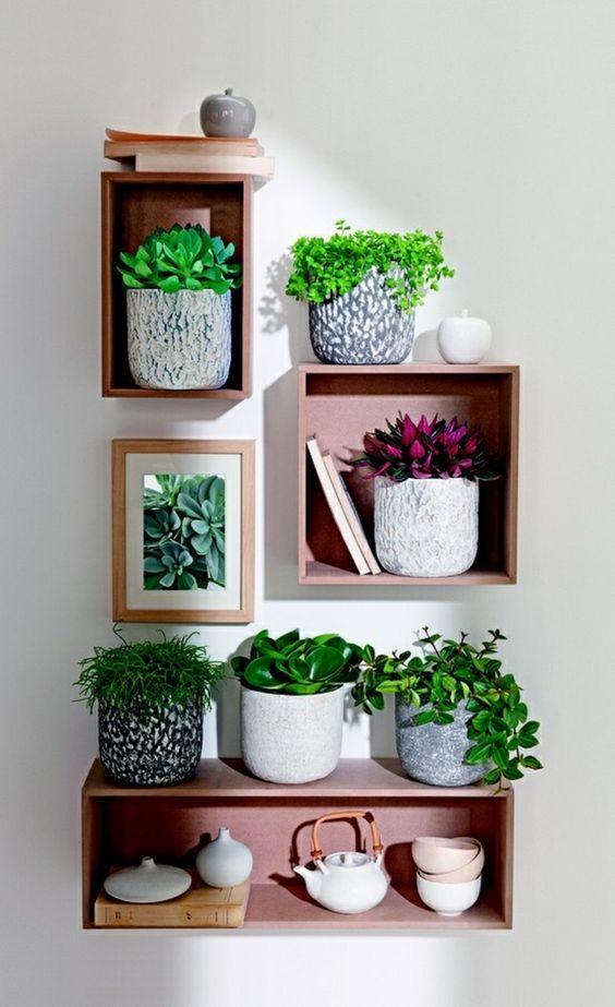 Schöne Zimmerpflanzen: So dekorieren Sie Ihr Zuhause mit pflegeleichten Pflanzen