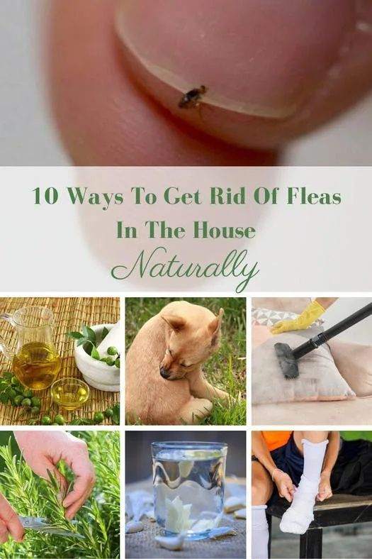 58086d4e3112c268f22292fb83dec8db - How To Get Rid Of Fleas Organically In Your House