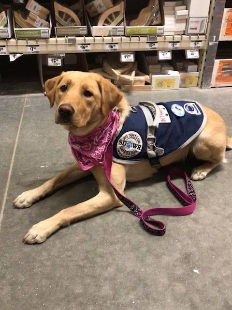Dove At Home Depot Service Dog Training Service Dogs Therapy Dogs