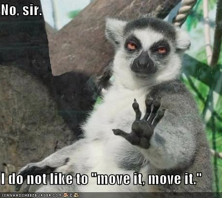 """No, sir.  I do not like to """"move it, move it."""": Funny Animals,  Indris,  Indri Indri, Funny Picture, Funny Stuff, So Funny, Funnie"""