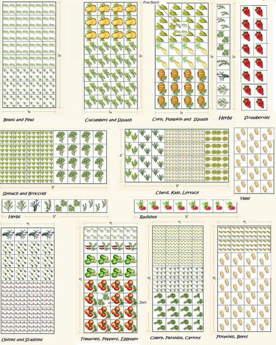 Vegetable garden plans projects to try pinterest for Vegetable garden layout planner