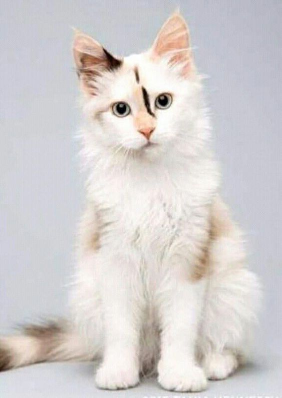 Cats And Stuff Image By Angela Giannetto Cute Cats And Kittens Pretty Cats Cute Cats