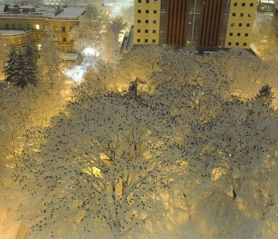 5. Hundreds of crows perched at night in the snow - Happy Worthy Life. Creativity - Wonder - Inspriration - Art