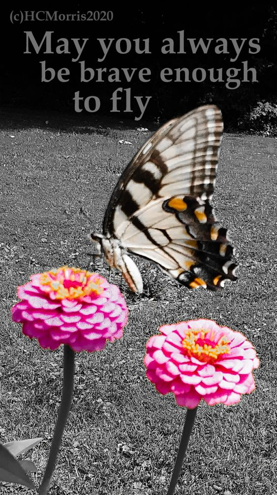 a yellow butterfly on pink flowers with black and white background