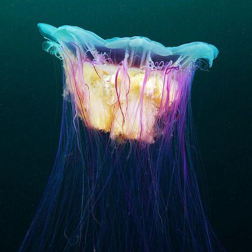 love jelly fish