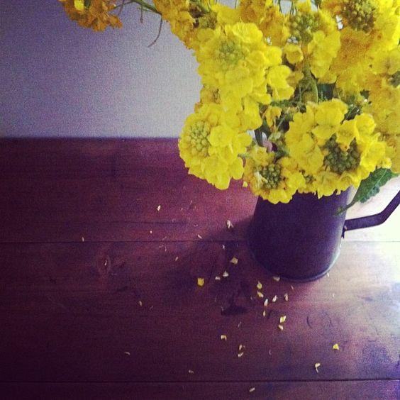 旅の思い出 「hozo」で買った大きなものはテーブルでした  f^_^; 菜の花はあの見事な名の花畑で摘ませてもらったもの  @mikabuta さんが一生懸命選んで摘んでくれました - @asacafe- #webstagram