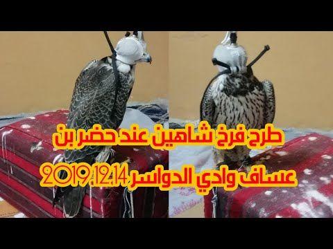 طرح فرخ شاهين عند حضر بن عساف وادي الدواسر 2019 12 14 Youtube Movie Posters Movies Falconry