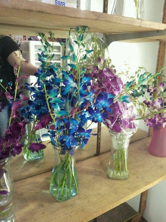 Found my blue orchids! Right down the street @ Grassis flowers. <3