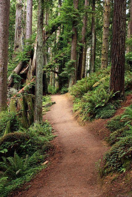 Část lesa patřící k paláci 58285b22afcc141de587fe1c92617ad5