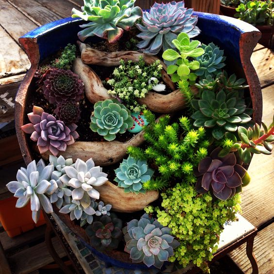 beautiful broken pot at succulent gardens succulent garden pinterest jardins beautiful et. Black Bedroom Furniture Sets. Home Design Ideas