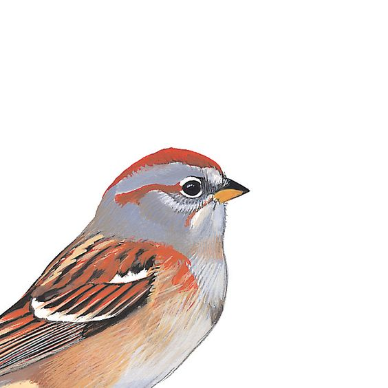 American Tree Sparrow. Painted and © by David Sibley