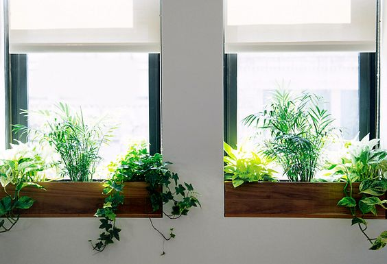 Potentially a way to introduce something organic... indoor window boxes? The windows are so deep that it could work or am I crazy?