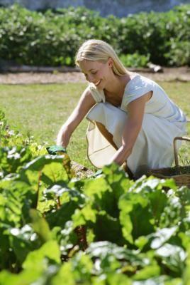 how to grow potatoes gardeners world