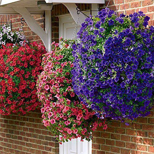 Surfinia Trailing Petunia Garden Summer Flowering Collection Jumbo
