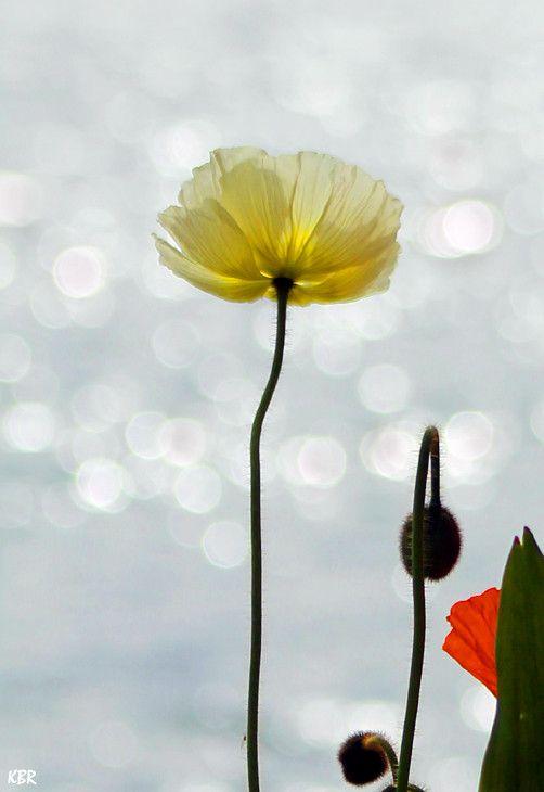 "500px / Photo ""Fleur"" by K B R"