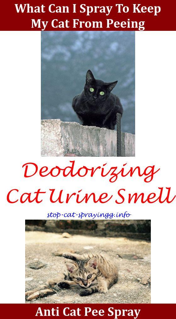 Female Cat Spraying Cat Spray Cat Pee Smell Cat Pee