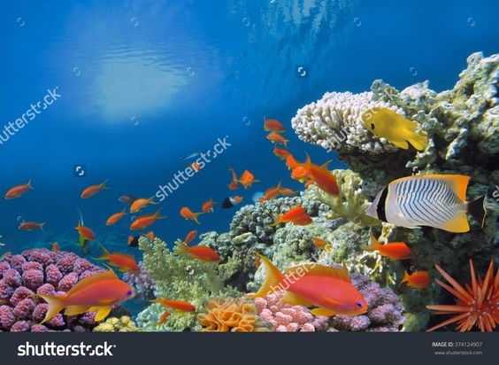Tropical Fish And Hard Corals In The Red Sea, Egypt Стоковые фотографии…