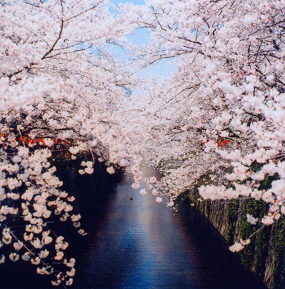 目黒川 桜祭り by blackteaj.justice, via Flickr