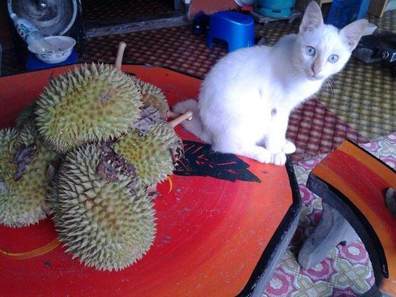 Cat & Durian