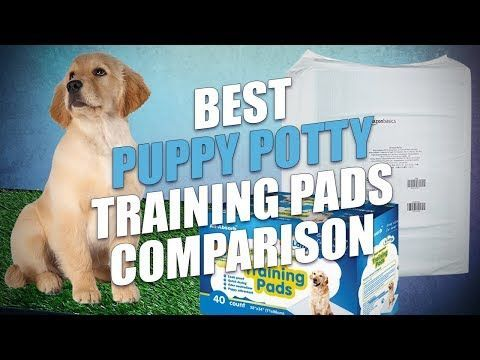 Pin By Jonathan Patchen On Dentist Humor Puppy Pads Training Puppy Training Best Puppies