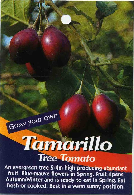 Tamarillo Tree