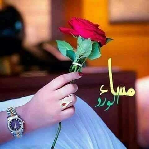 وردة الحب الصافي Holding Flowers Flower Girl Photos Red Flowers