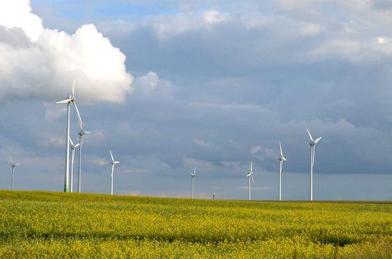 Windräder, Rapsfeld, bei Wolgast