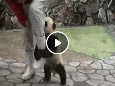 Não vá embora, ou me leve com você por favor!!