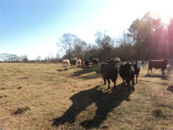 Ashland, Clay County, Alabama land for sale - 25 acres at LandWatch.com