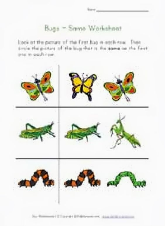 Worksheet Free Insect Worksheets gardens ideas and insects on pinterest worksheets free garden amp insect doc worksheetfun free