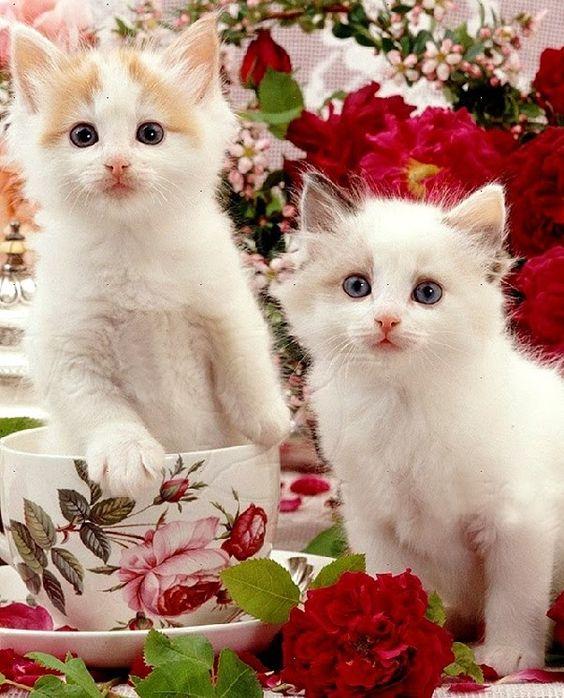 Gatos lindos y tiernos jugando - Compilación en vídeo de Gatos tiernos y...
