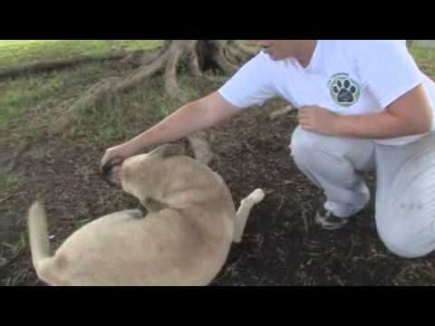 How To Train A Service Dog Youtube And Pics Of How To Train Your