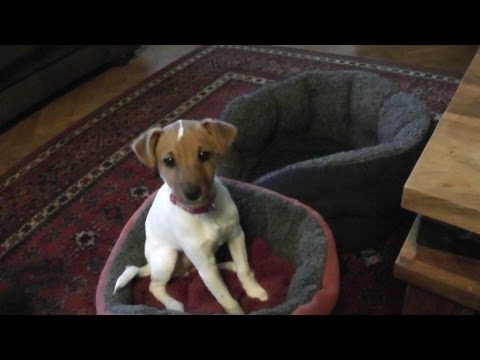 Funny Dog Video Dogs Dancing Our Pup Is So Cute Spinning To The