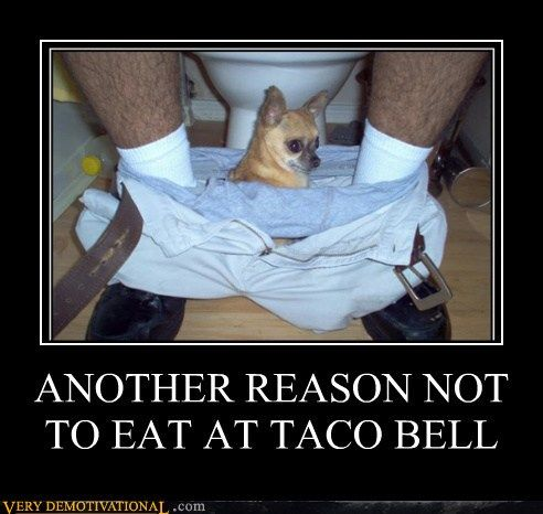 LOL I just fell back in love with Taco Bell too...