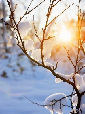 #sunrays #sunlight #snow #nature #forest #winter
