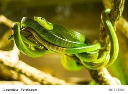 Schlangen als Haustier im Terrarium