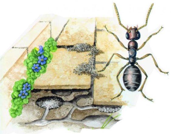 Ameisen umsiedeln oder natürlich vertreiben
