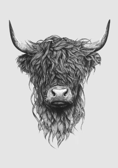 Line Drawing Cow Face : Highland cattle art print bilder tattoo ideen und