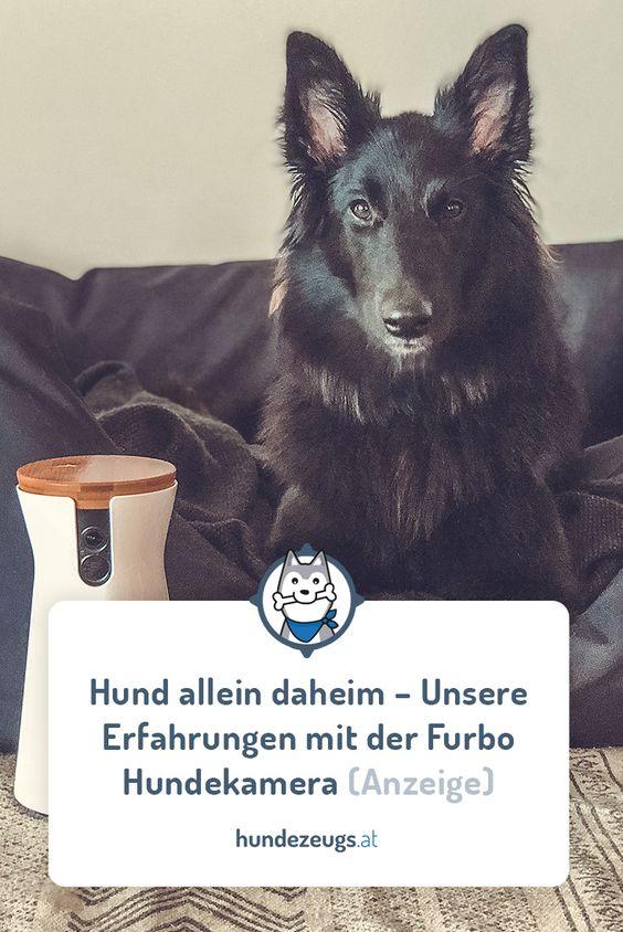 Hund Allein Daheim Unsere Erfahrungen Mit Der Furbo Hundekamera
