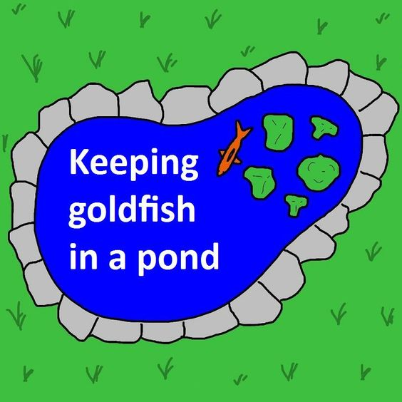 Pinterest the world s catalog of ideas for Building a goldfish pond