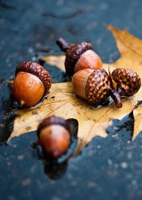 Remembrances of my childhood with the sound of acorns crunching beneath my…: