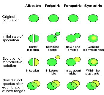 Sympatric speciation - Wikipedia, the free encyclopedia