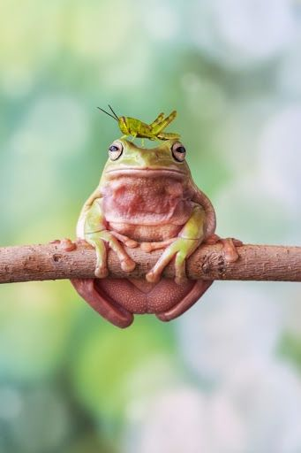 """Tree frog and friend. I know God was thinking """"little boys are gonna love this one."""""""