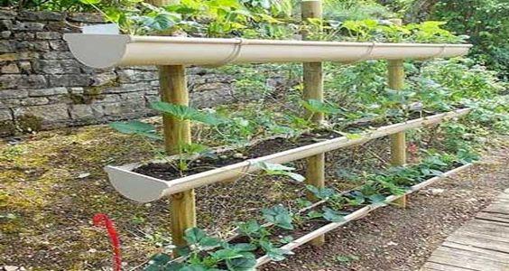 explorez potager aménagé potager pour et plus encore rouge jardins ...