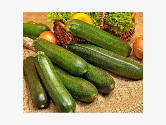 dunkelgrüne Zucchini 'Defender'