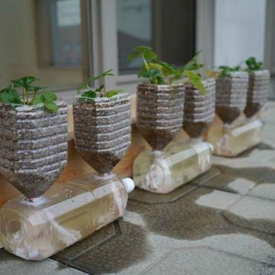 Aprenda Como Fazer Uma Horta Com Garrafa Pet de Forma Simples | Revista Artesanato