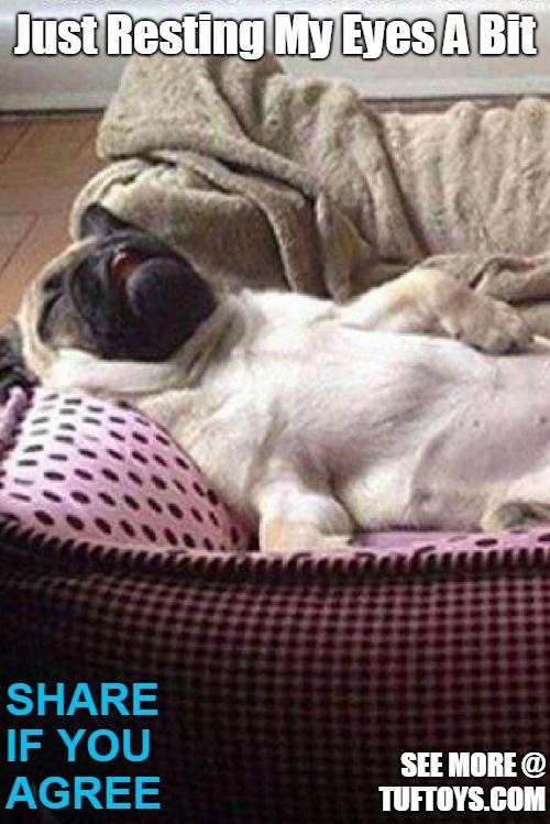 Funny Picture Of Dog Collapsed On His Back On A Sofa Looking
