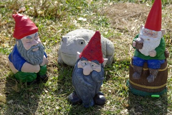 Do you know why fairy gardens are not for gnomes?