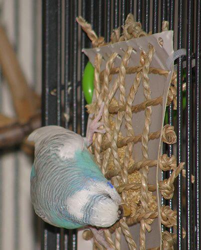 DIY Cardboard backed Climbing Net - PetDIYs.com
